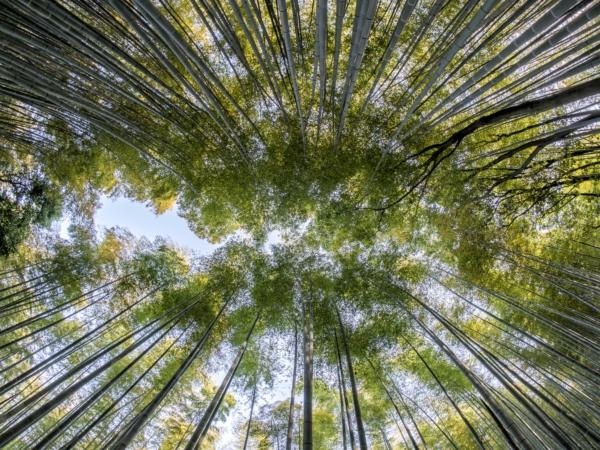 bamboo-1886974